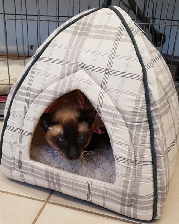 angry kitty in a cat tent